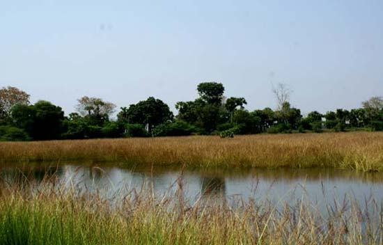 Vedurupattu-Bird-Sanctuary