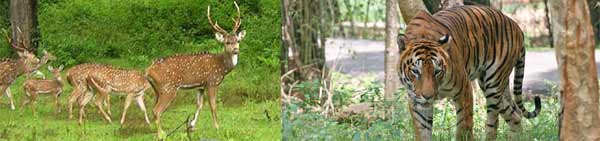 Telangana-WildLife-Tour-Package