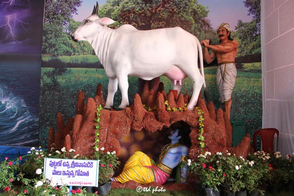 Cow-Milk-Srinivasa