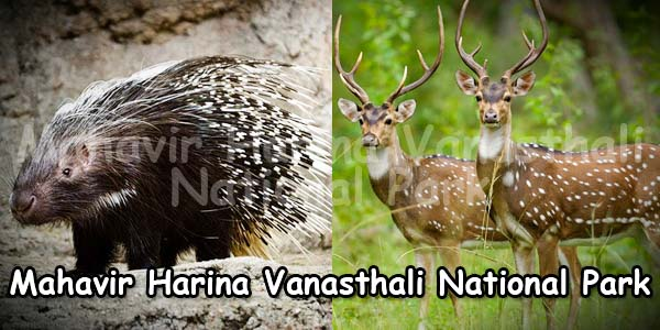 Mahavir Harina Vanasthali National Park Hyderabad