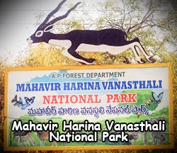 Mahavir Harina Vanasthali National Park