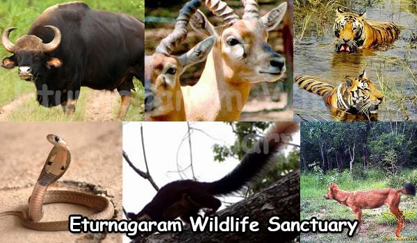 eturnagaram-wildlife-sanctuary-warangal