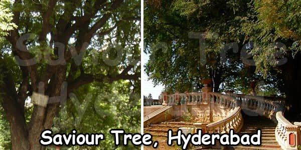 saviour-tree-hyderabad