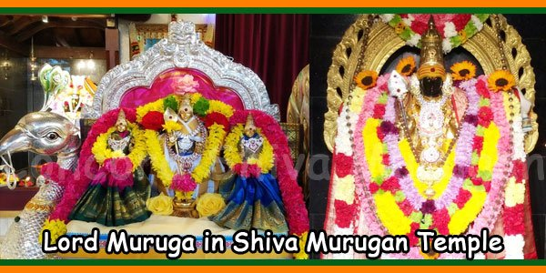 Lord Muruga in Shiva Murugan Temple