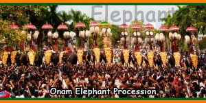 Onam Elephant Procession