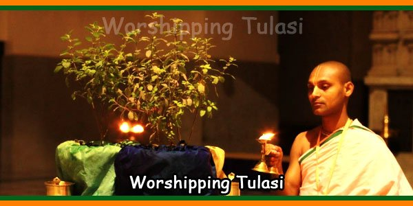 Worshipping Tulasi